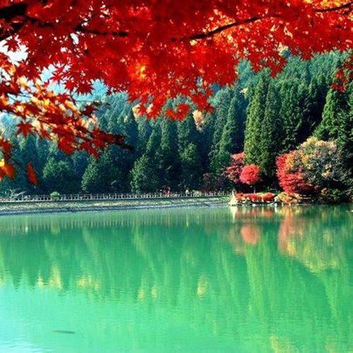 Maravilhas da natureza...do mundo!: Yamanashi Ken, Autumn View, Da Naturezado, Stunning Autumn, Autumn Walks, Autumn Seasons, Autumn Color, Autumn Beauty, Things Beauty