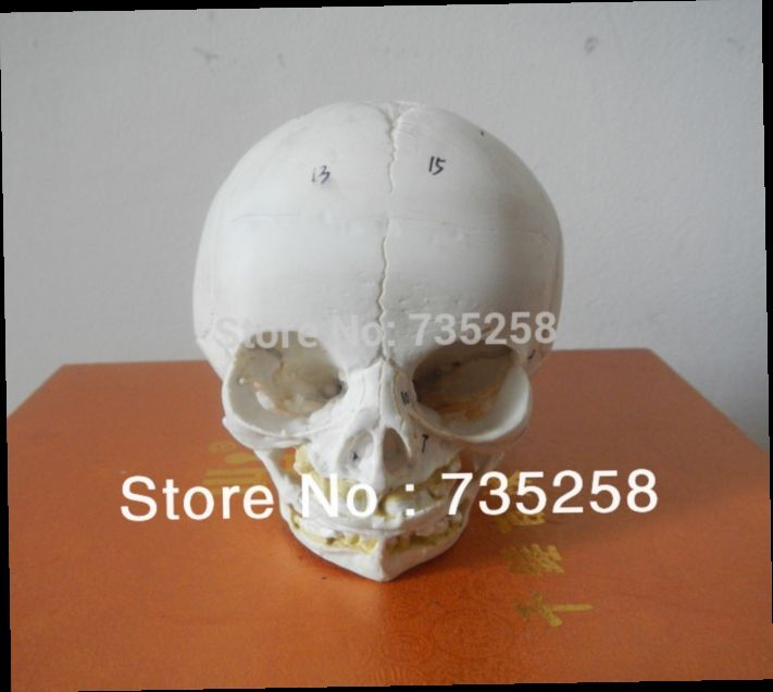 55.00$  Watch here - http://alii4r.worldwells.pw/go.php?t=1319003716 - Senior Baby Skull Model,Fetal Skull Model,Baby Skull Simulation Model 55.00$