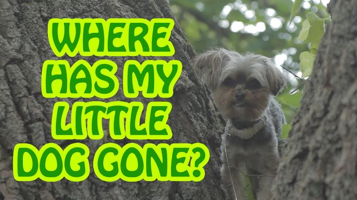 Where, Oh Where Has My Little Dog Gone?  |  Video Nursery Rhymes for Kids  |  Cute Animals