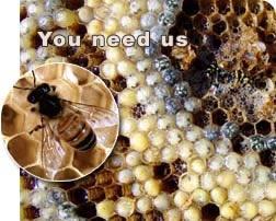 Honey Bee Control Bangalore