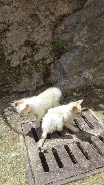 Vildkatter på Amalfikusten