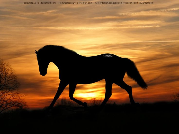 One more beautiful picture of horse...
