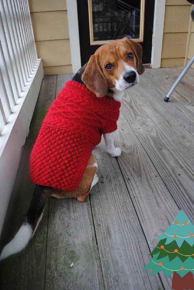 Mejores 37 imágenes de Dog Clothes & Things en Pinterest | Perro ...