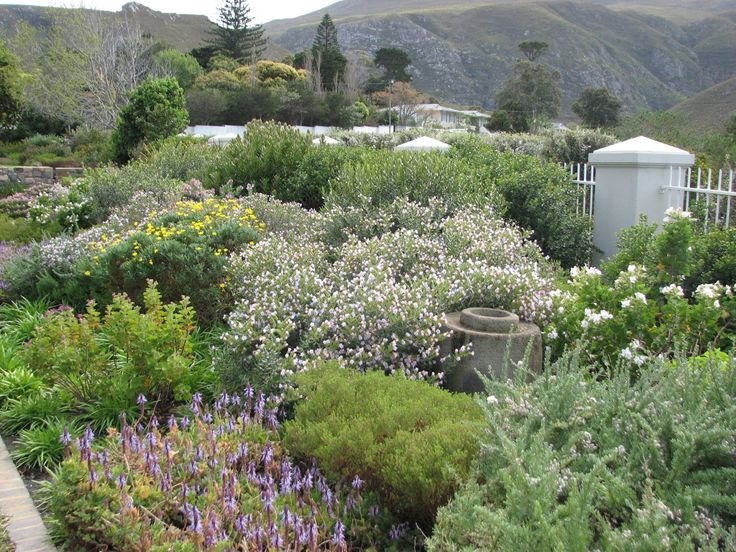 fynbos country cottage garden style