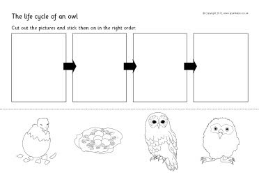 Life cycle of an owl cut and stick activity (SB8750) - SparkleBox
