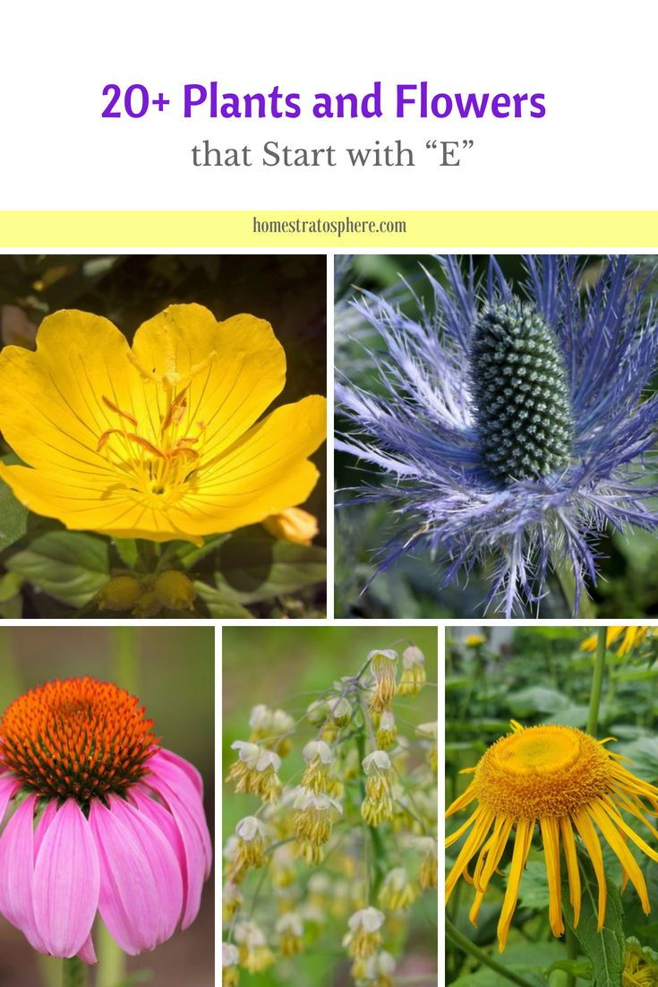 20 Plants And Flowers That Start With E Plants Flowers Rock