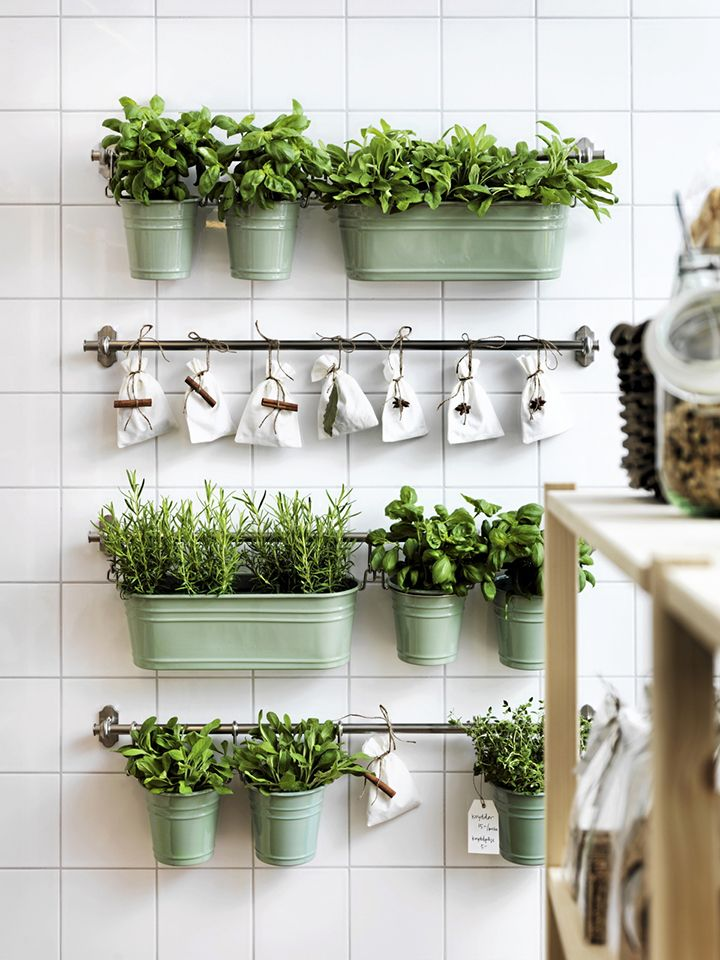 Disposição de horta na cozinha