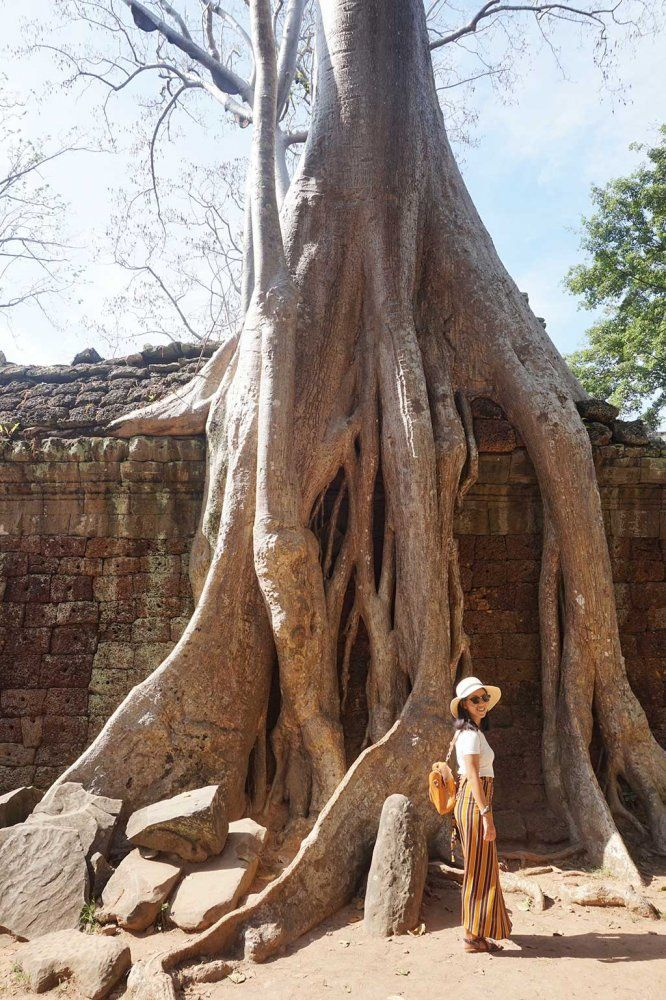 A giant tree growing over the walls of Banteay Kdei in Angkor Thom, Siem Reap, Cambodia