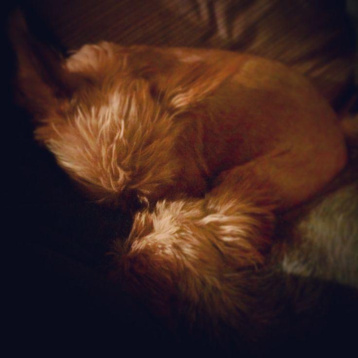 La tenerezza infinita di Akira e Snoopy che, accoccolati alla mia destra, non solo dormono l'uno accanto all'altro, ma si premurano di tranquillizzare il fratello qualora questi si lamenti a causa di sogni irrequieti…