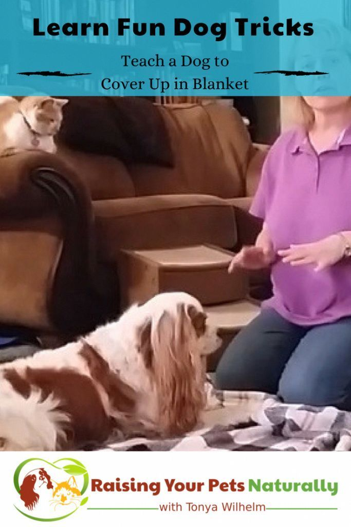 How Can You Teach A Dog New Tricks How To Teach Your Dog To Bow