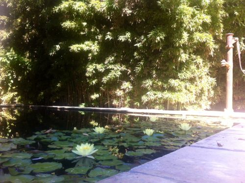 The pretty pond in the courtyard and the beautiful water lilies