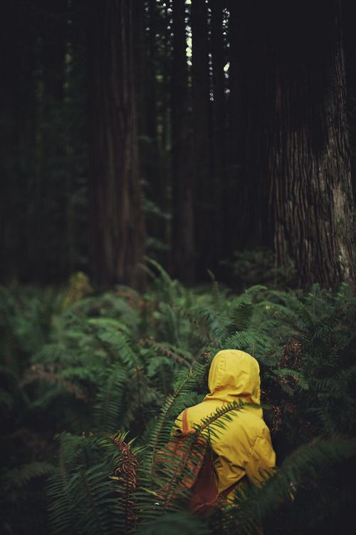 adventure in ferns.