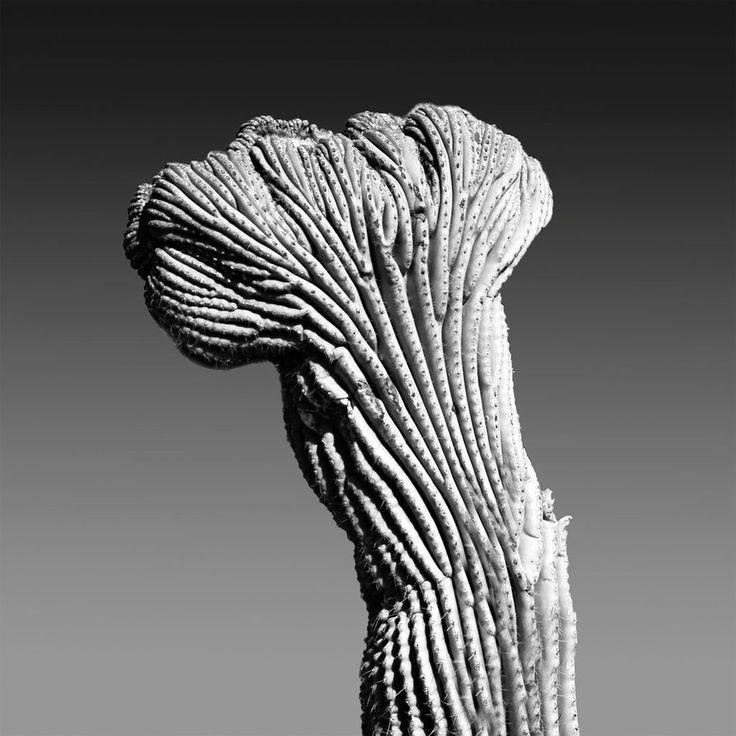 Cactus Mutatus Mono by Meenigma on DeviantArt