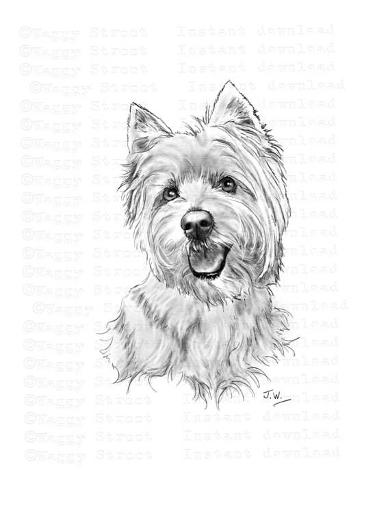 Westie Clipart Instant Download Digital Pencil Drawing Art West