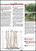 Growing Vegetables & Edible Plants, Growing Trees & Shrubs – How to prune raspbe…  – Hobby farm ideas