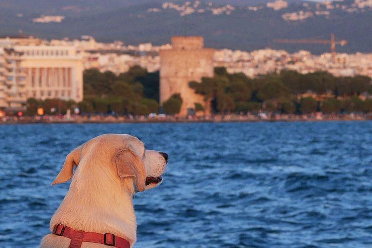 Ένας σκύλος στο λιμάνι (Ιούλιος 2017)