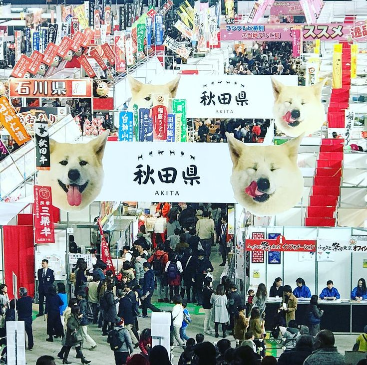 201701Daily #東京ドーム #ふるさと祭り