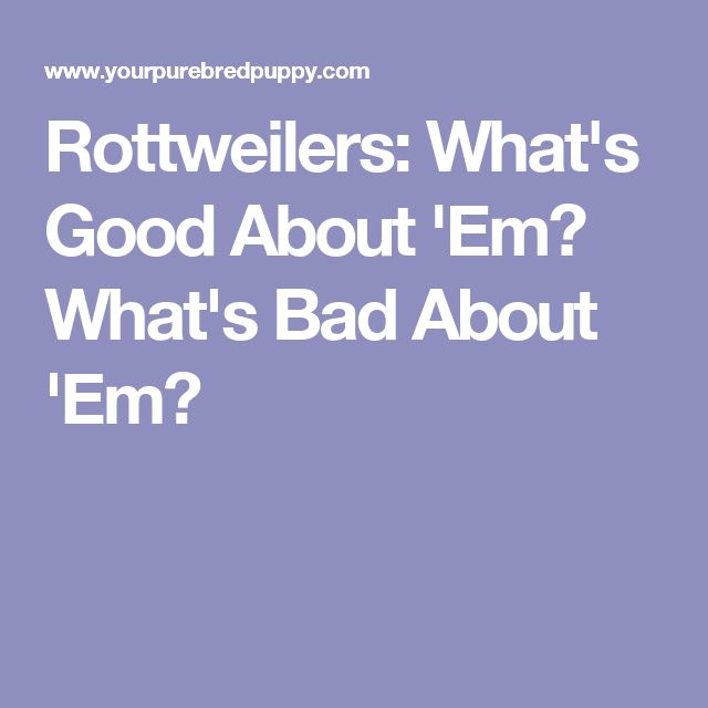 Rottweilers: What's Good About 'Em? What's Bad About 'Em?