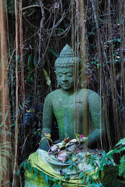 """""""To stop suffering, stop greediness. Greediness is a source of suffering."""" - Buddha.  (Bali - Ubud, The Lost Temple)"""