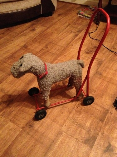 Never Seen A Curly Haired One Before Dogs On Wheels
