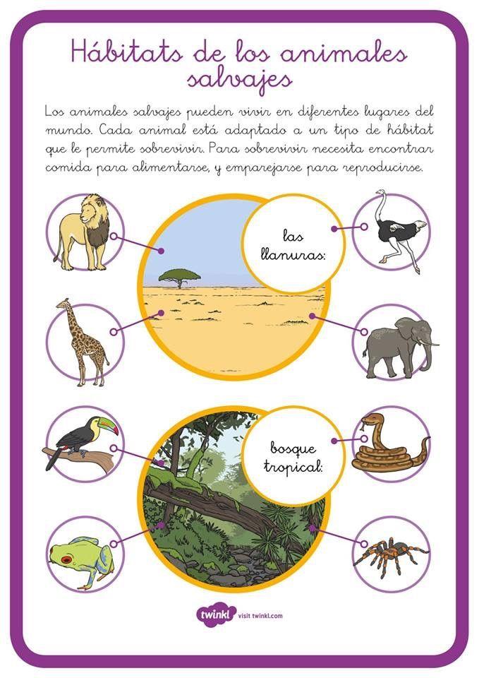 Pin De Contdeteresa En Habitats Bosque Tropical Habitat Animales Salvajes
