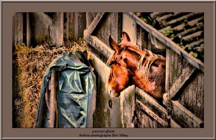 rural horse  by Artiste photographe -ERIC VILLEY