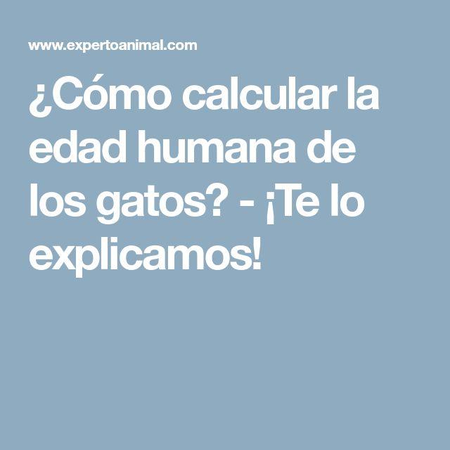 ¿Cómo calcular la edad humana de los gatos? - ¡Te lo explicamos!