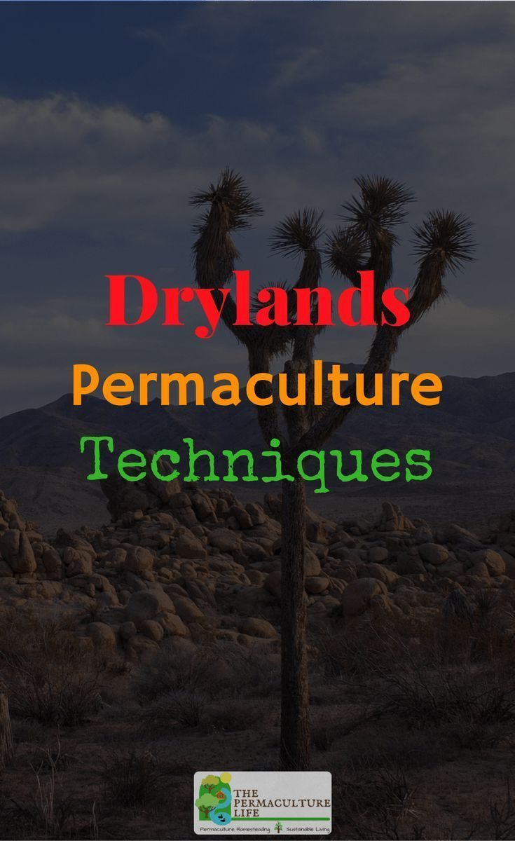 Permaculture uses several techniques to deal with a drylands (i.e. desert or sub-desert) climates. We'll talk about some of these techniques. #thepclife #permaculture