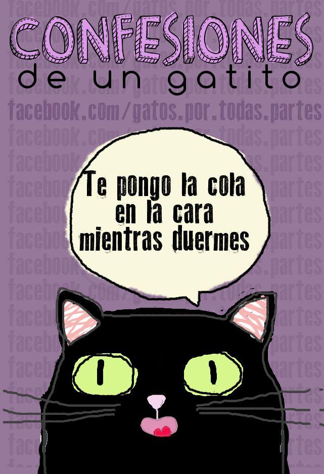 Todos lo hemos sufrido #cats