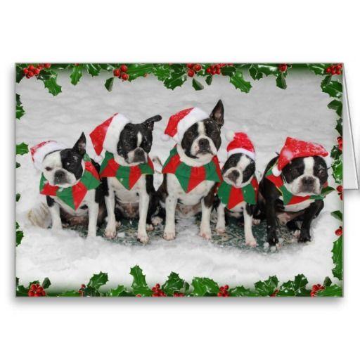78 best A Boston Terrier Christmas! images on Pinterest | Merry ...