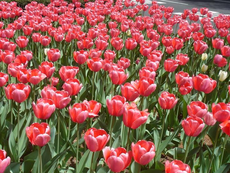 New York, Park Avenue, Spring Time