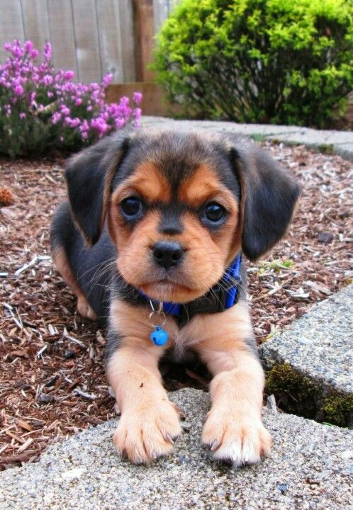 Puggle, sorry for the spam, birthday list please