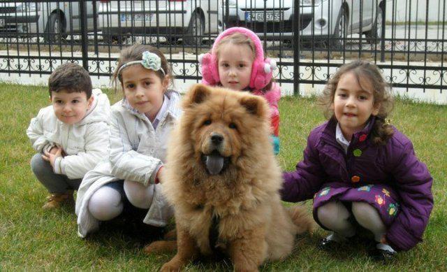 Evcilbesinleri.com'un resmi evcili Hımbıl çocuklarla çok iyi anlaşır.