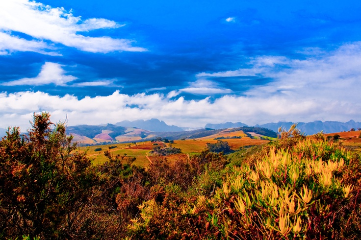 Awesome Photograph I took at the Stellenbosch Hills