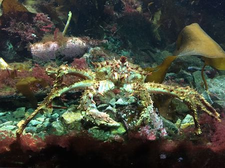 Crab Photo by Carl Christian Glosemeyer Andersen — National Geographic Your Shot