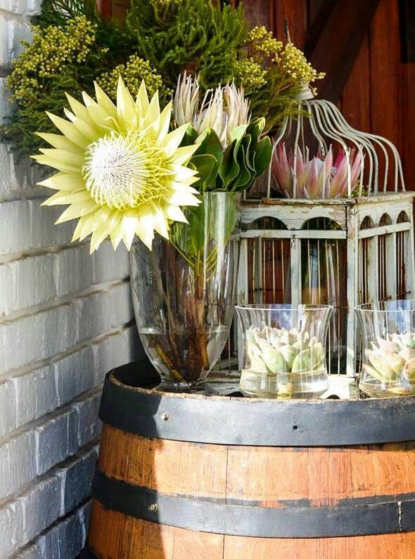 Giant protea and succulents .My wedding decor