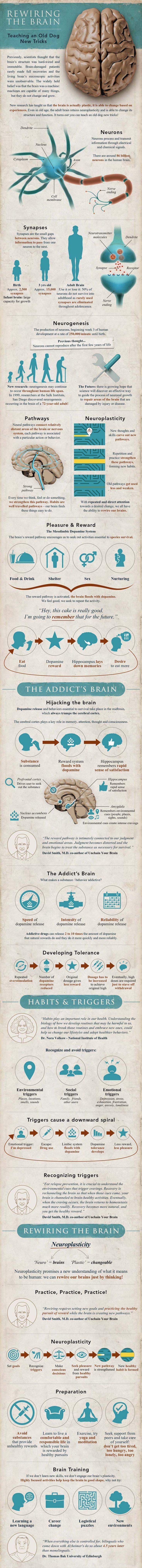 Neuroplastisicity