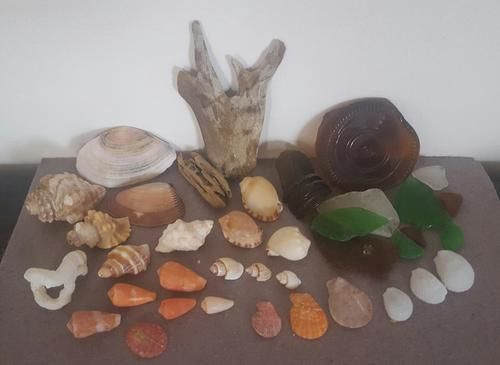 Buy Sea Shells & rare sea glass from Jeffreys Bay (cleaned handpicked) beach, driftwood, fish aqarium for R45.00