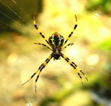 We love Sumatra's beautiful spiders!