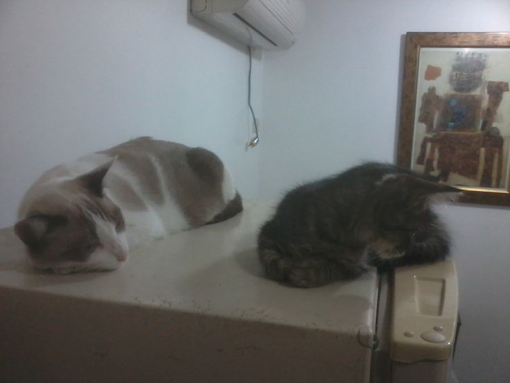 Cotton y Gema