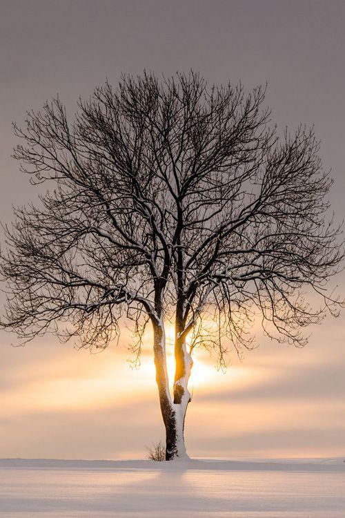 Solitary Treescape #3 || HeikoGerlicher