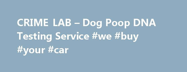 CRIME LAB – Dog Poop DNA Testing Service #we #buy #your #car http://car-auto.nef2.com/crime-lab-dog-poop-dna-testing-service-we-buy-your-car/  #cars 4 sale # Home Mr Dog Poop website home page introducing people to the company, services and the dog poop industry. Our DNA Lab Tour Mr Dog Poop's DNA lab, see the equipment and learn about the Dog Poop…Continue Reading