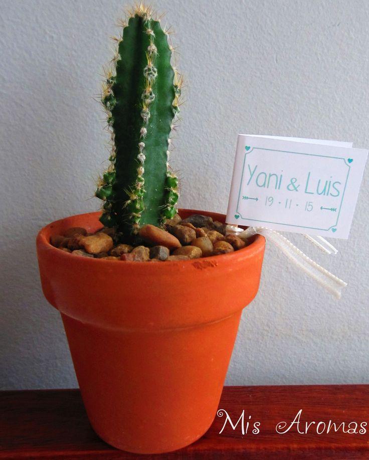 98 best souvenirs con suculentas/cactus y aromáticas images on