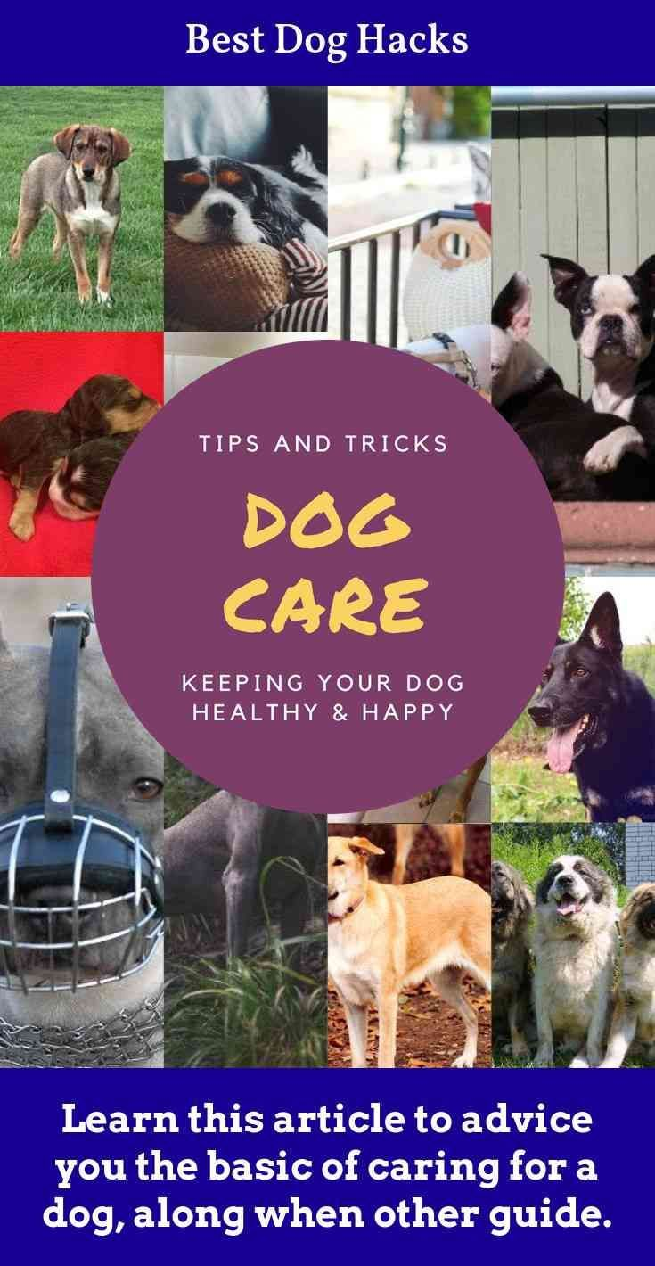 Simple Tips Made Easy To Help You Figure Out Dogs Dog Hacks Dog