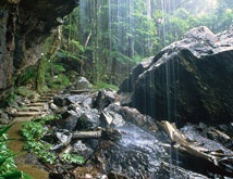 Tamborine Mountains, Gold Coast Hinterland, Queensland