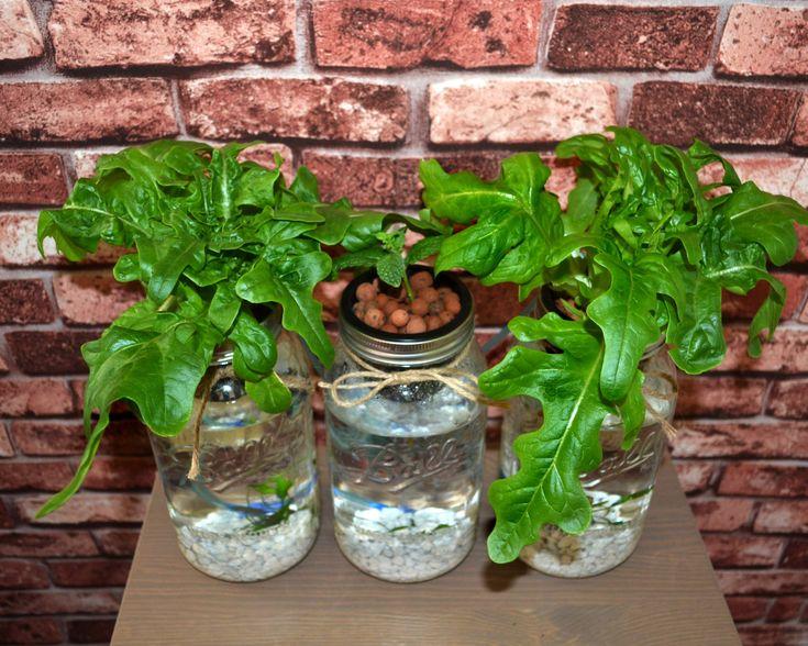 Best 25 Aquaponics Kit Ideas On Pinterest Hydroponic Herb Garden Diy Hydroponics And Aquaponics