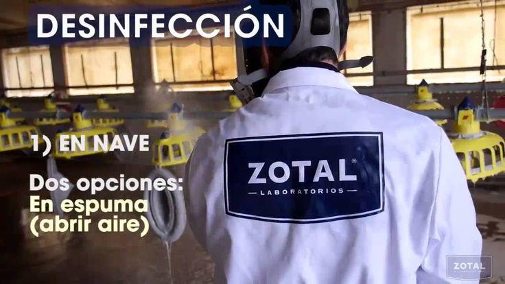 En este vídeo te enseñamos a desinfectar, de forma eficaz, instalaciones ganaderas con el desinfectante Sanitas Forte Vet de Zotal Laboratorios.