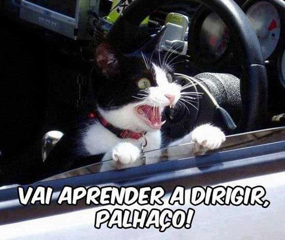NilgatesWorld: Imagens para Facebook - Gatos engracados