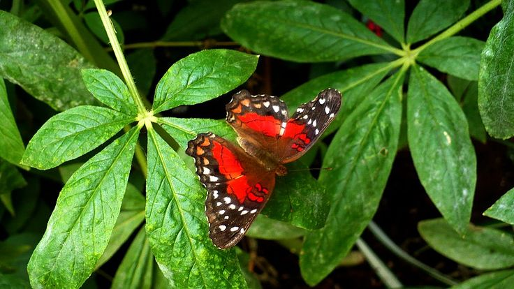 CLIPE TRAITE ALTFEL !: world butterflies - London exibition with alive butterflies at Natural History Museum