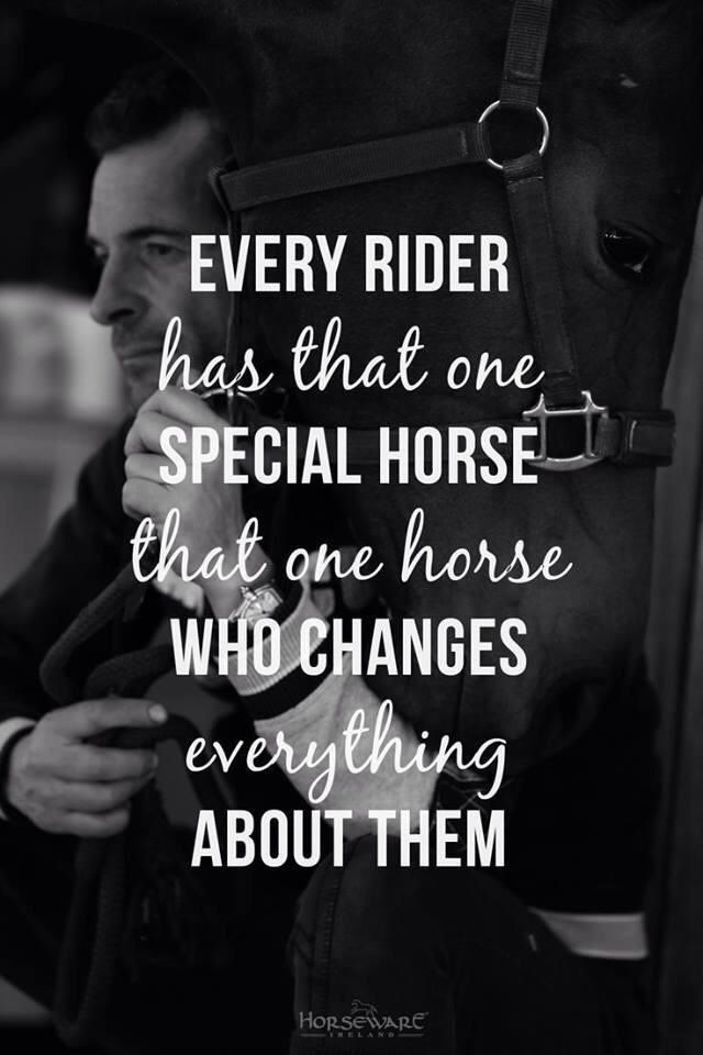 "lorijoloveshorses: ""Every Rider has that One Special Horse, That One Horse Who Changes Everything About Them """